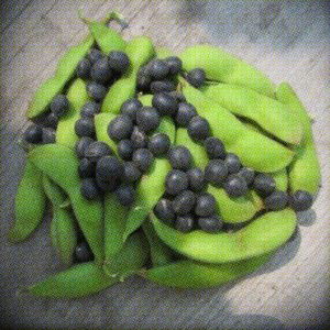 Black Panther Endamame