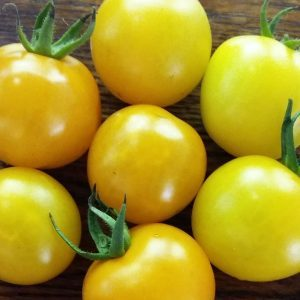 Green Gage Heirloom Tomato