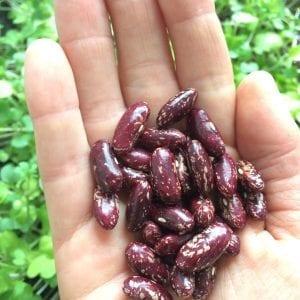 Iroquois Cornbread Beans