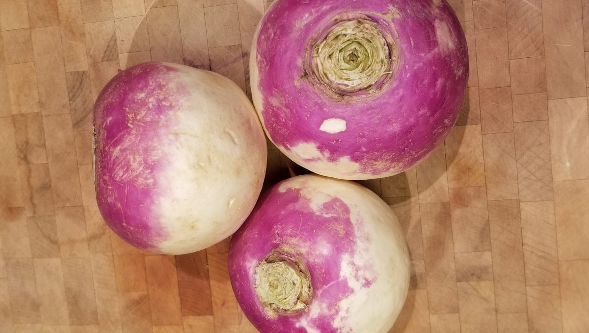 Purple Top Turnip