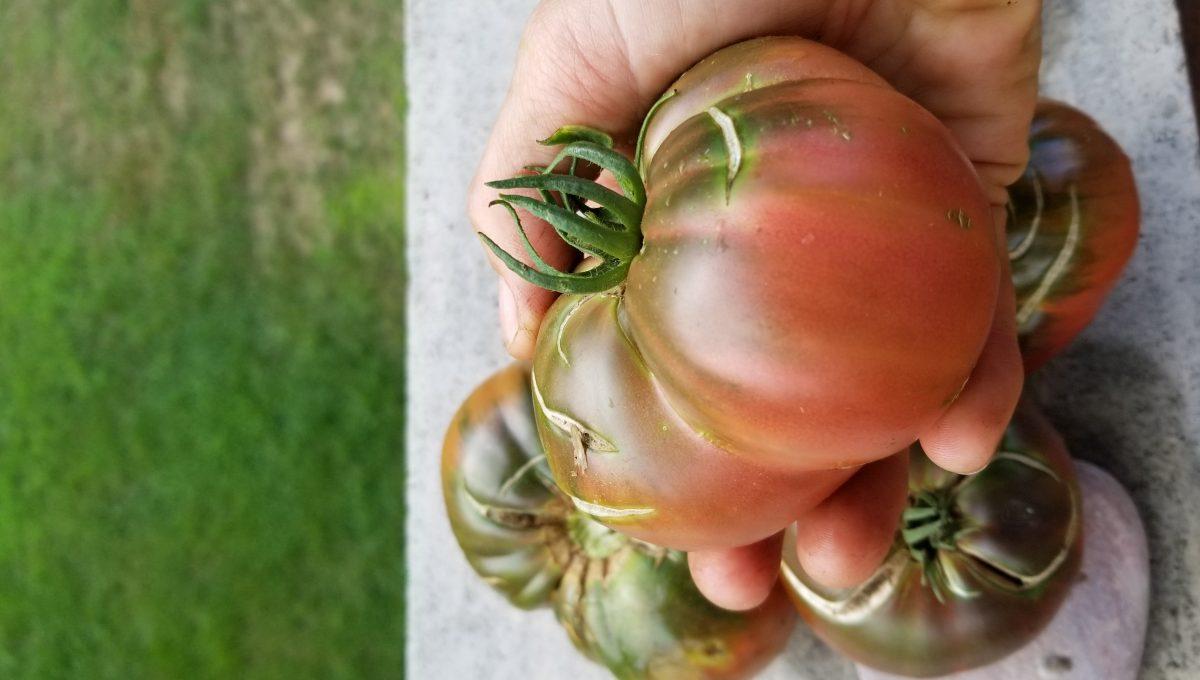 Cherokee Purple Heirloom Tomato (Copy)